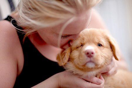 бебе, кученце, семейство, куче