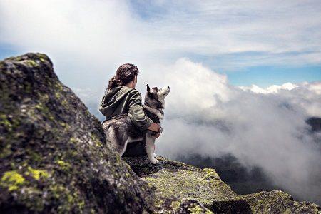 спорт, куче, тичане, приятел, тренировка, аджилити